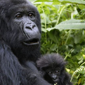 Explore Rwanda Tours (@explorerw) Avatar