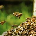 Bee Control Melbourne (@beepestcontrolmelbourne) Avatar