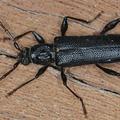 Cockroach Control Melbourne (@borerpestcontrolmelbou) Avatar