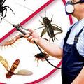 Eco Pest Control Melbourne (@pestcontrolecosafe) Avatar
