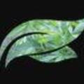 Folium Biosciences (@foliumbiosciences) Avatar