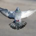 pigeontype (@pigeontype) Avatar
