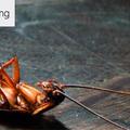 Domestic Pest Control Toowoomba (@pestcontroltoowoomba) Avatar