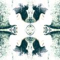 Gaz (@gazellebstn) Avatar