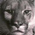 catmanhunting (@catmanhunting) Avatar