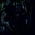 2006ix (@23s) Avatar