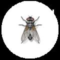 AMPM Exterminators (@washington220) Avatar