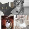 FunnyCatsVideo (@funnycatsvideos) Avatar