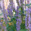 The Backyard Bloom (@thebackyardbloom) Avatar