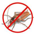 Cockroach Control Moreton Bay (@cockroachcontrolmoretonbay) Avatar