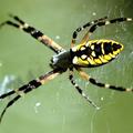 Spider Control Moreton Bay (@spidercontrolmoretonbay) Avatar