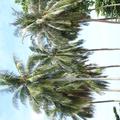 paket wisata pulau belitung (@paketwisatabelitung) Avatar