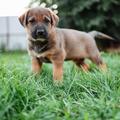 Info about puppy (@infoaboutpuppy) Avatar