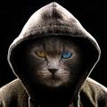 Breaker O'Day (@darkcat) Avatar