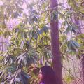 Caelon (@noleacyahsin) Avatar