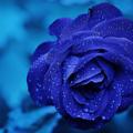 Blue Spectrum (@bluespectrum) Avatar