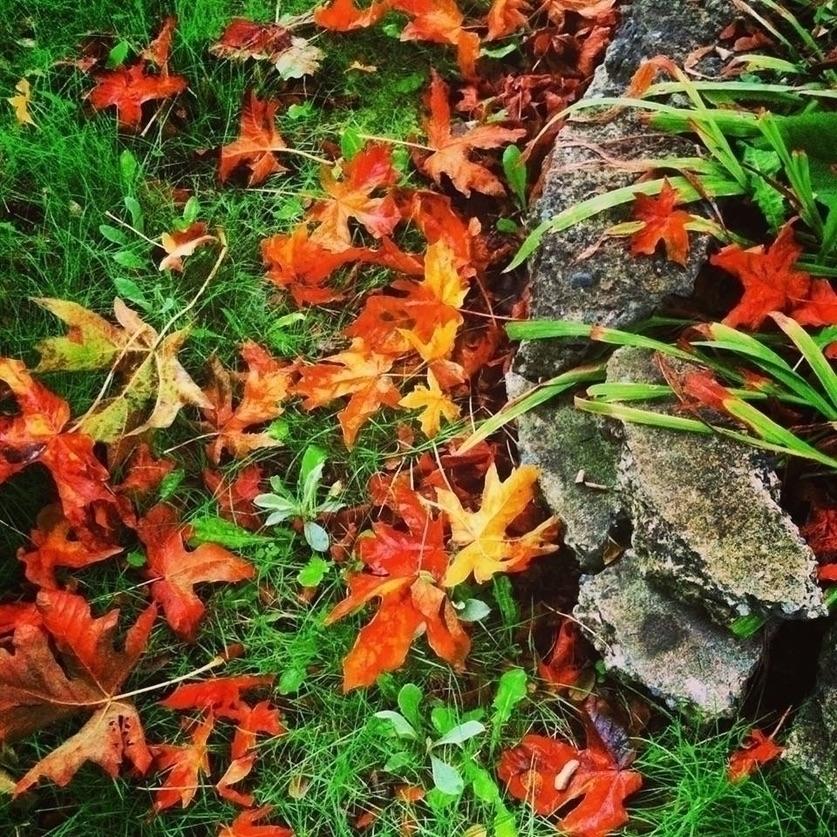 susannah rose woods (@sanarose) Cover Image