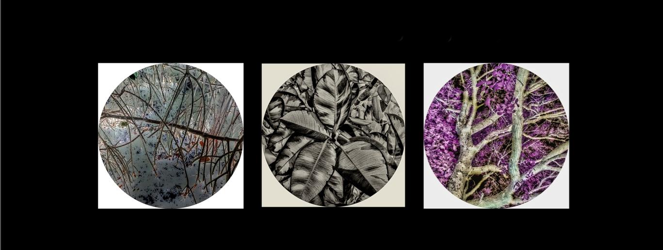 Louienstudio-Wearable Visuals (@crosslandfilms) Cover Image