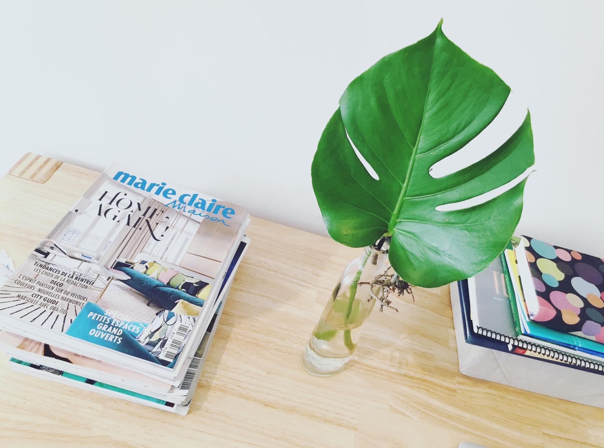 Liva Judic (@liva) Cover Image