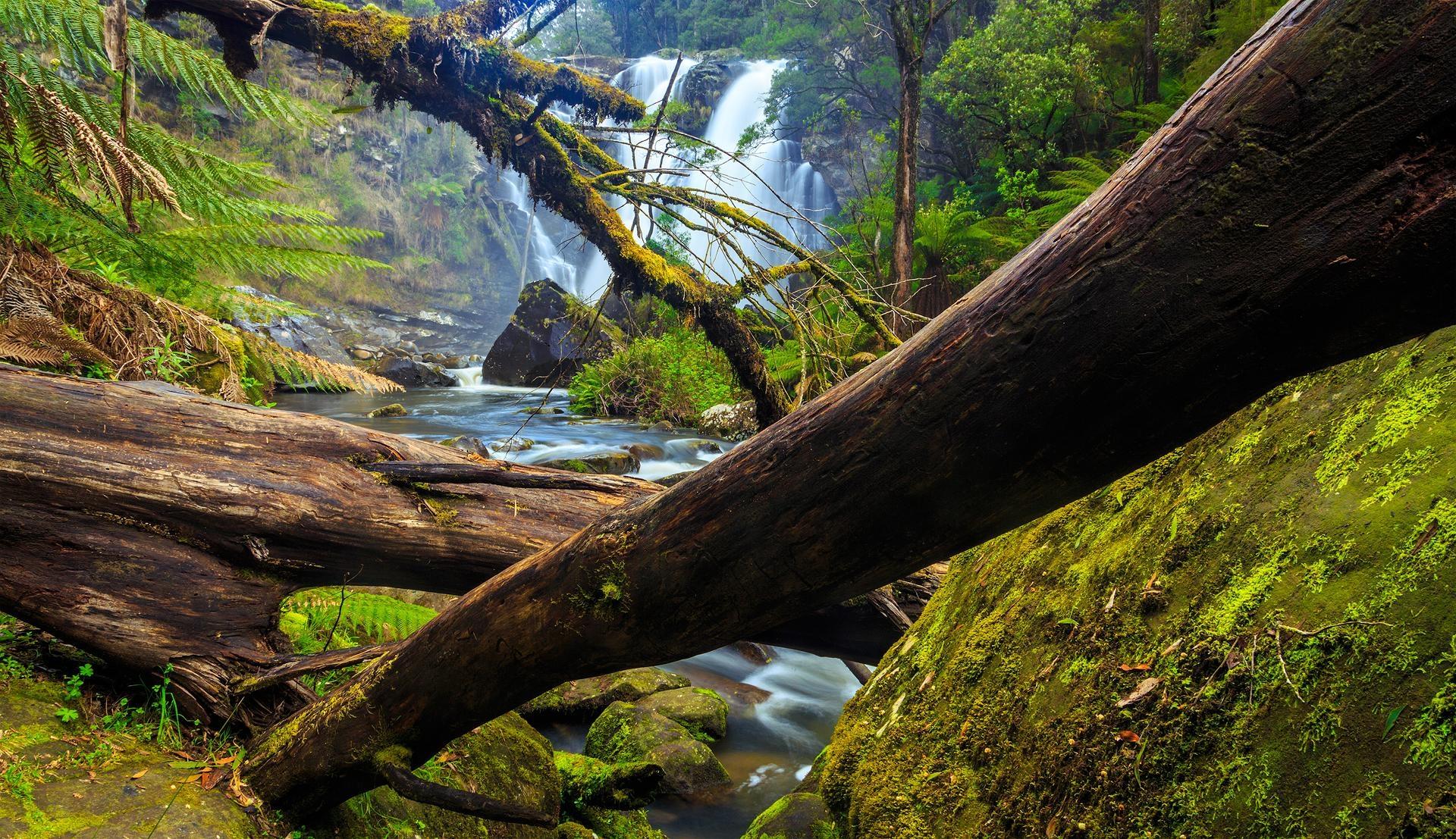 Mybrid Trees Wonderful (@mybrid) Cover Image