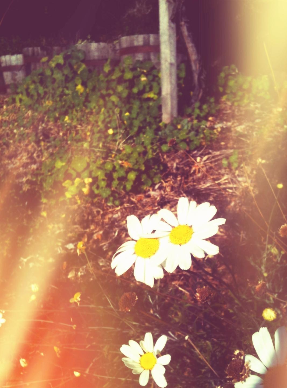Mia (@miamachine) Cover Image