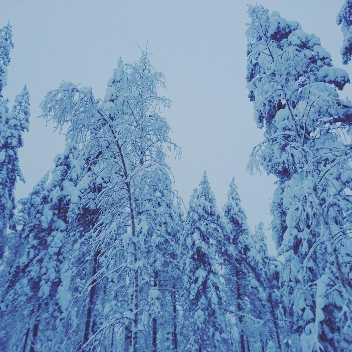 Tarja  (@tarjakoski) Cover Image