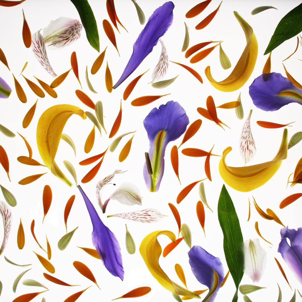 damaestudi (@damaestudi) Cover Image