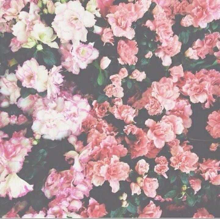 Alia Omran (@aliaomrn) Cover Image