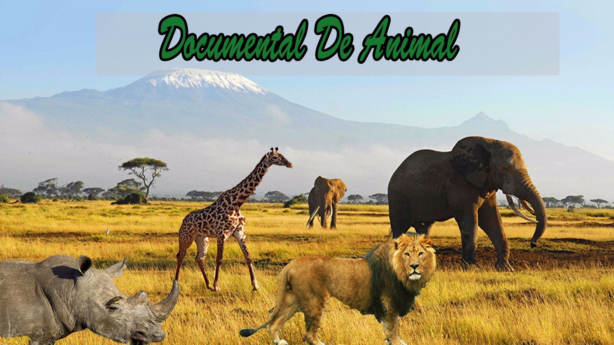Documental De Animales (@documentaldeanimales) Cover Image