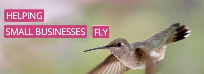 Nancy Verdi (@hummingbirdwebdesign) Cover Image
