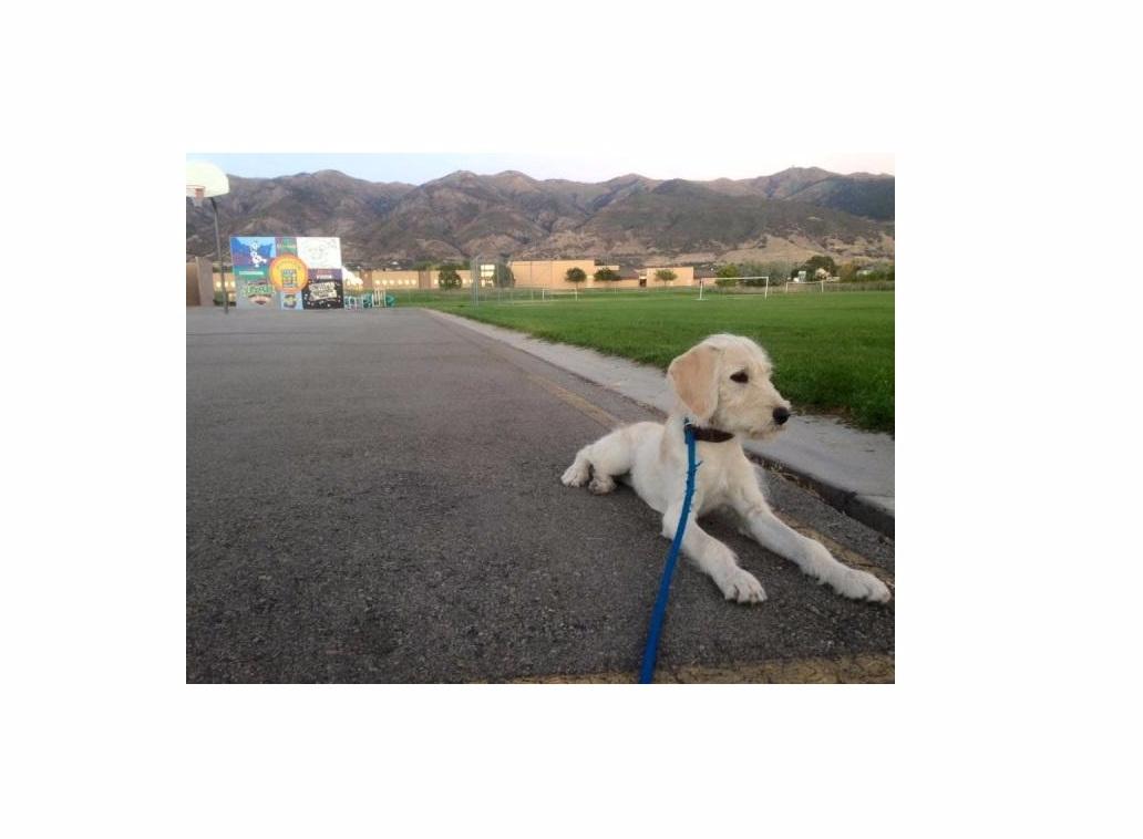Cornerstone Dog Training (@cornerstonedog) Cover Image