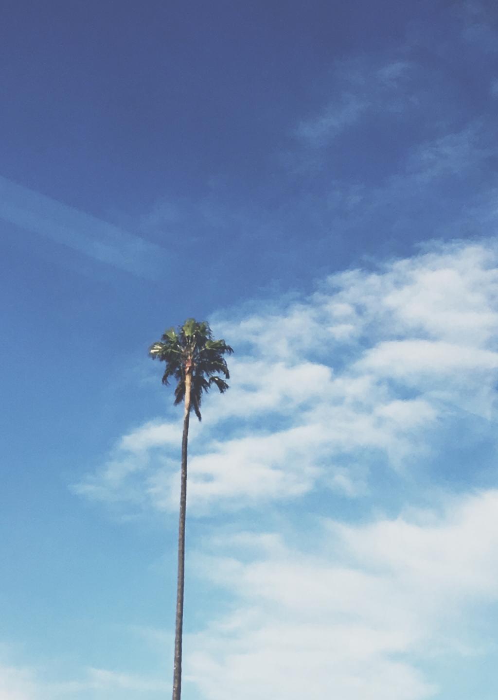 cyclone  (@tokillamockingbird) Cover Image