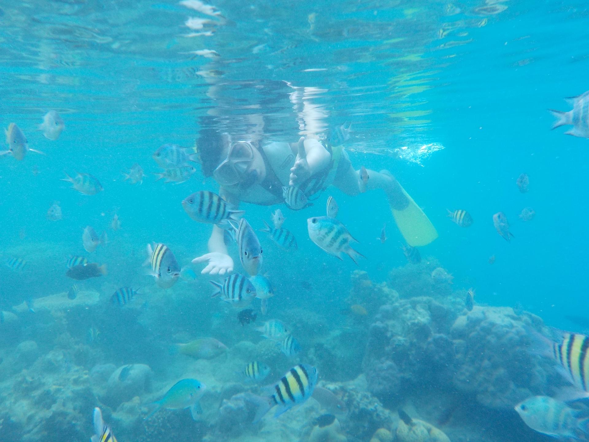 Kepulauan Seribu (@kepulauanseribu) Cover Image