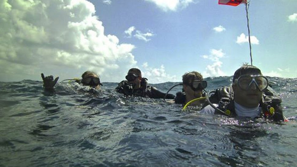 South Florida Scuba Lessons (@scubalessons) Cover Image
