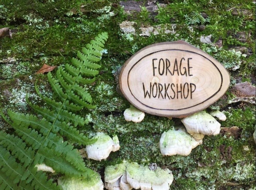 Forage Workshop (@forageworkshop) Cover Image