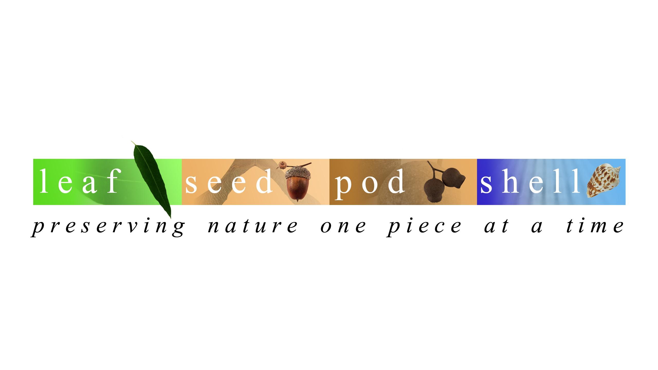Leaf Seed Pod She (@leafseedpodshell) Cover Image