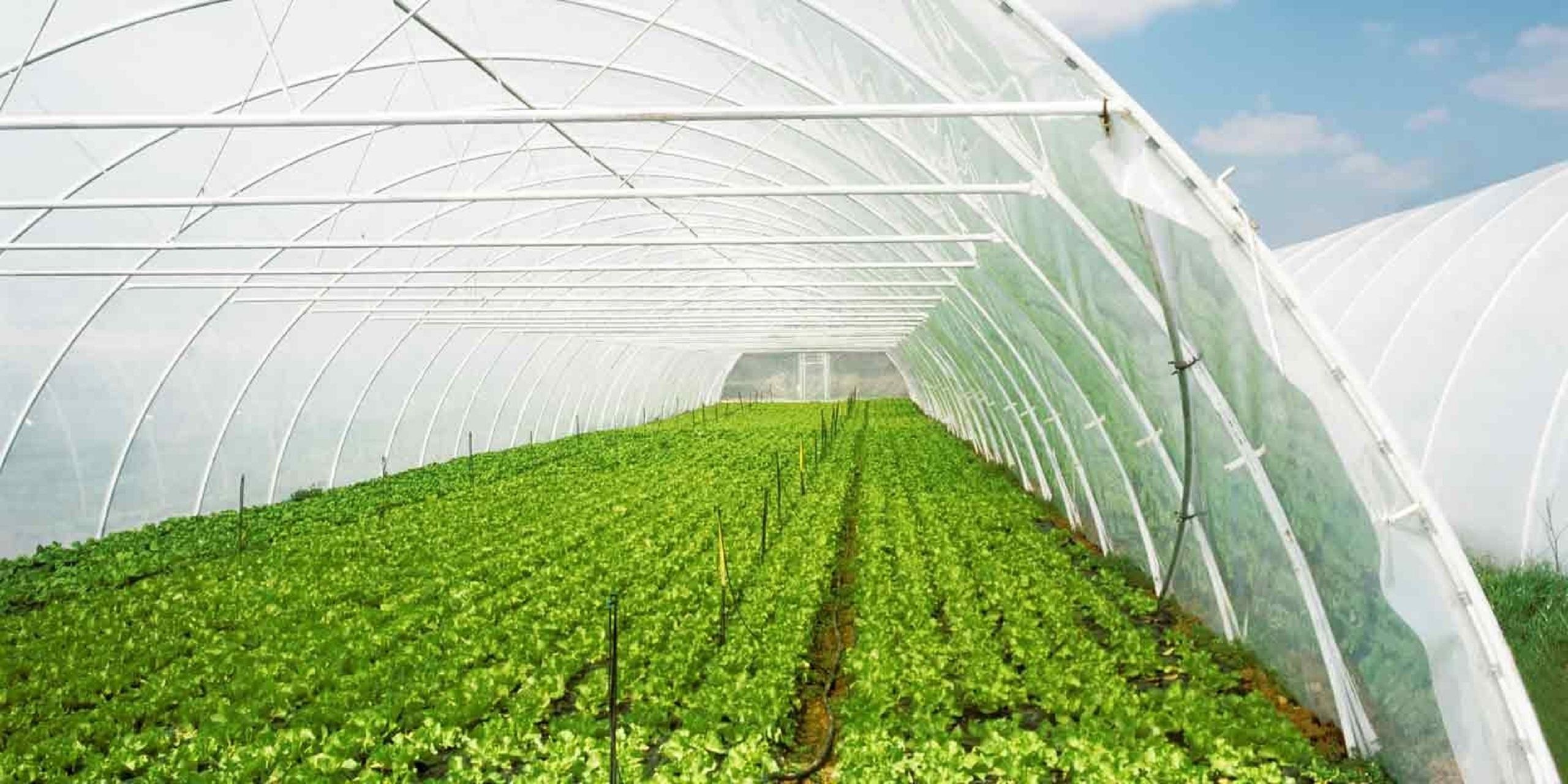Advance Greenhouses (@advancegreenhouses) Cover Image