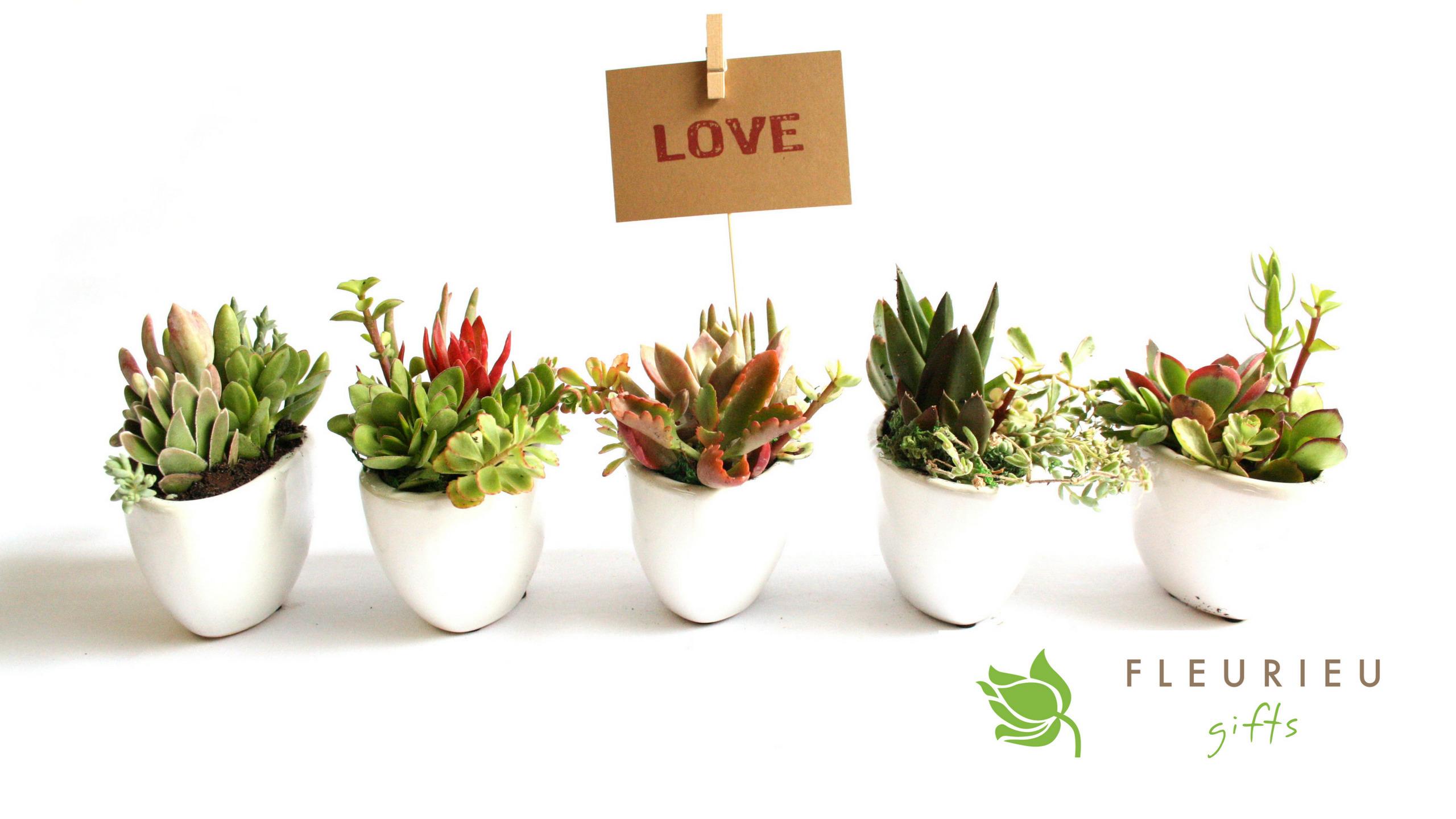 Fleurieu Gifts (@fleurieugifts) Cover Image