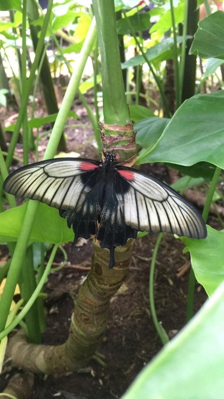 Schmetterlingsdämon (@kellykoistinen) Cover Image
