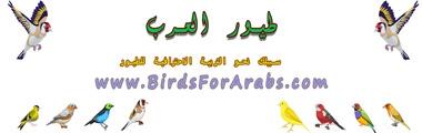 طيور العرب (@birdsforarabs) Cover Image