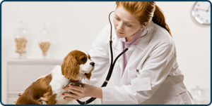 West Heights Veterinary Hospital (@westheightsvet) Cover Image