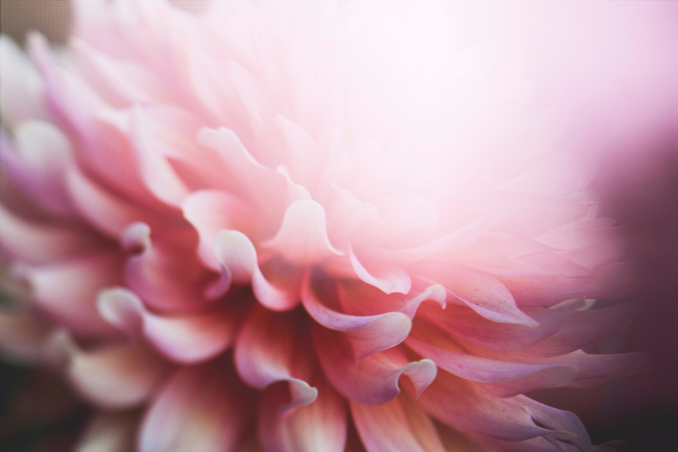 Gloria (@aeterna_phantasia) Cover Image