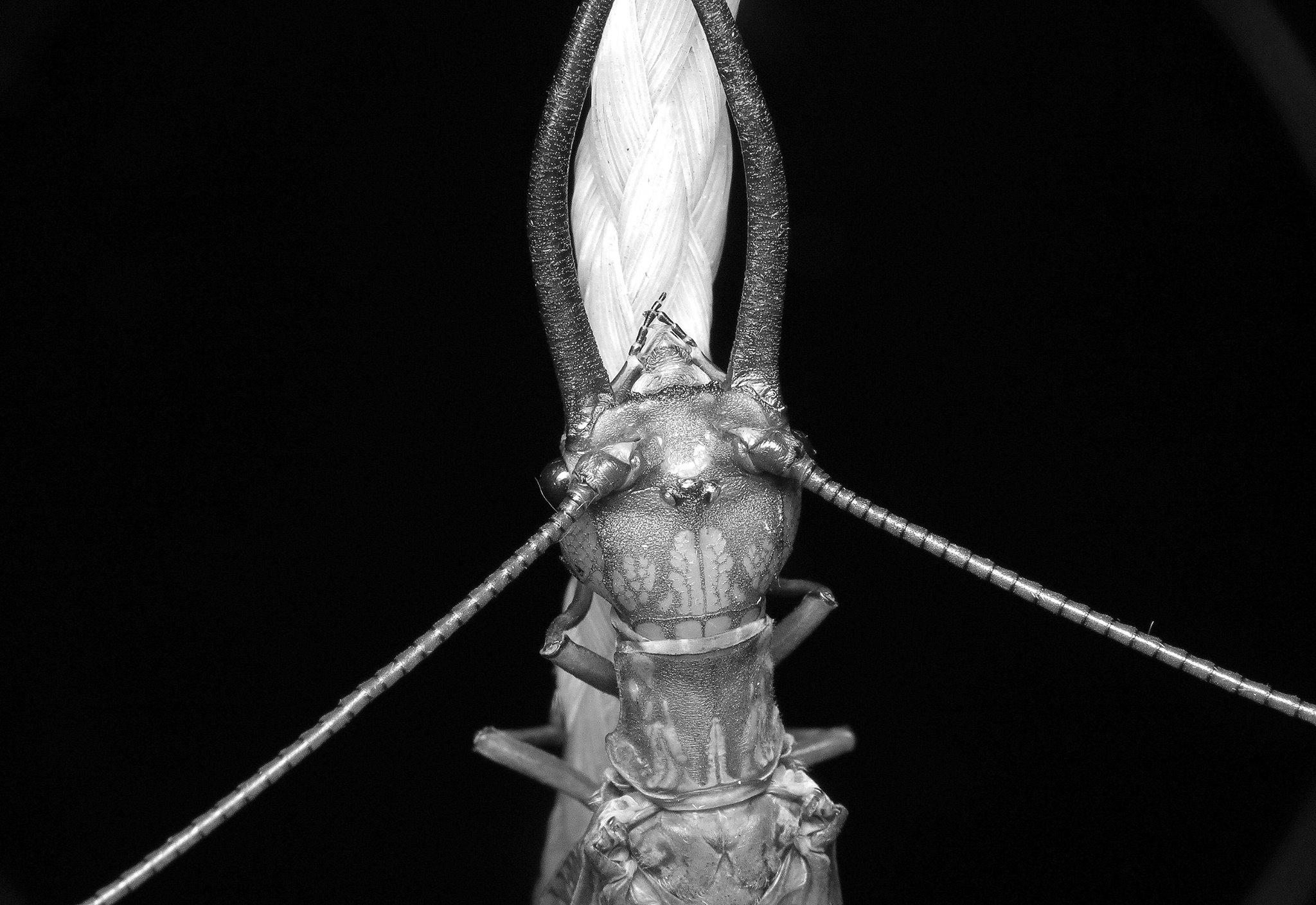 Bug of the Day (@bugoftheday) Cover Image