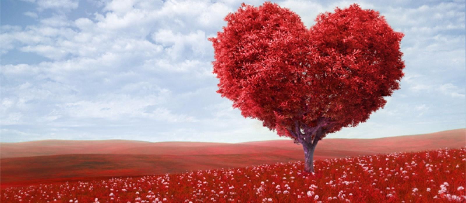 San Valentin (@sanvalentin) Cover Image