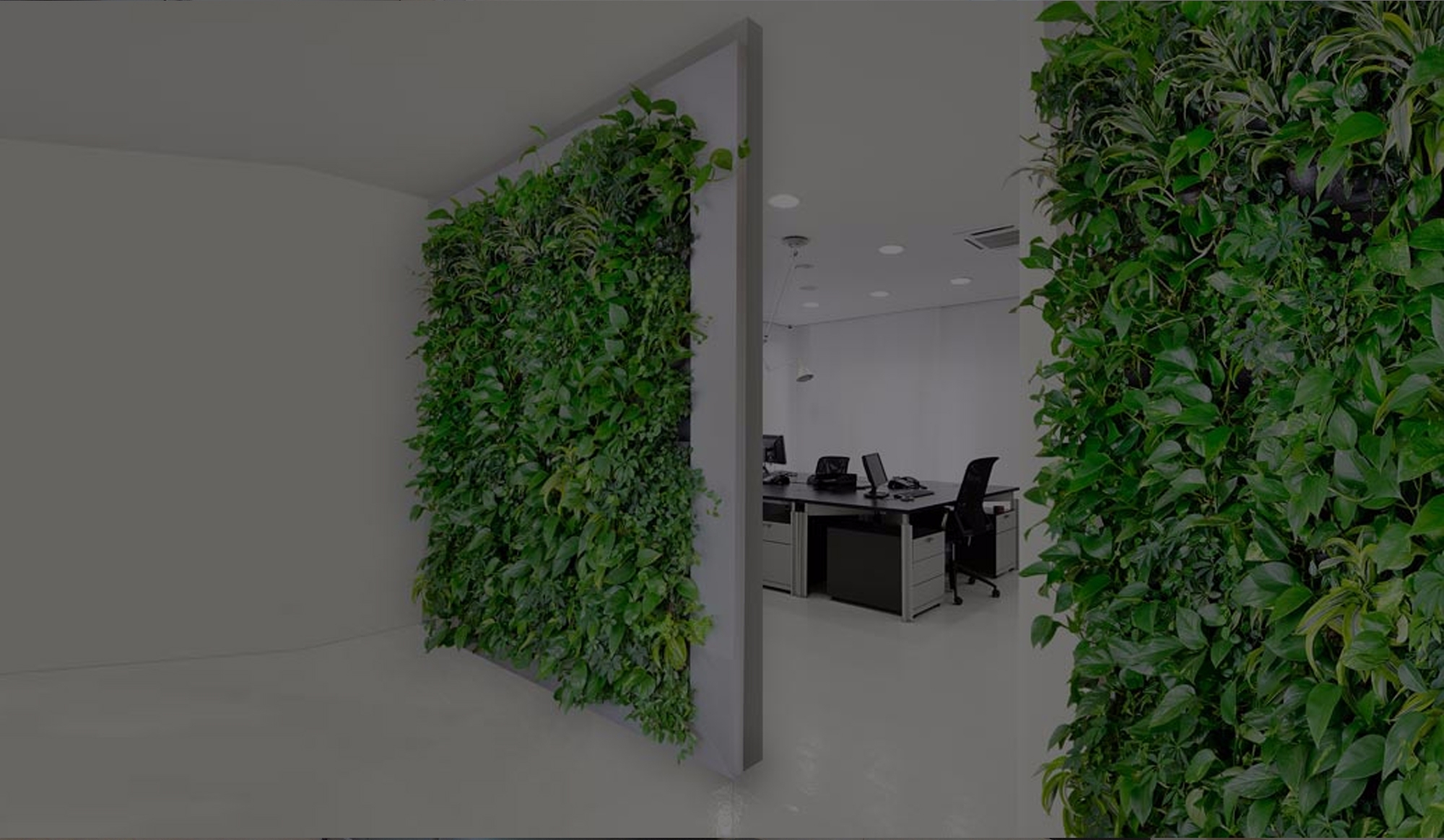 Green Wall Designs LLC (@greenwalldesigns) Cover Image