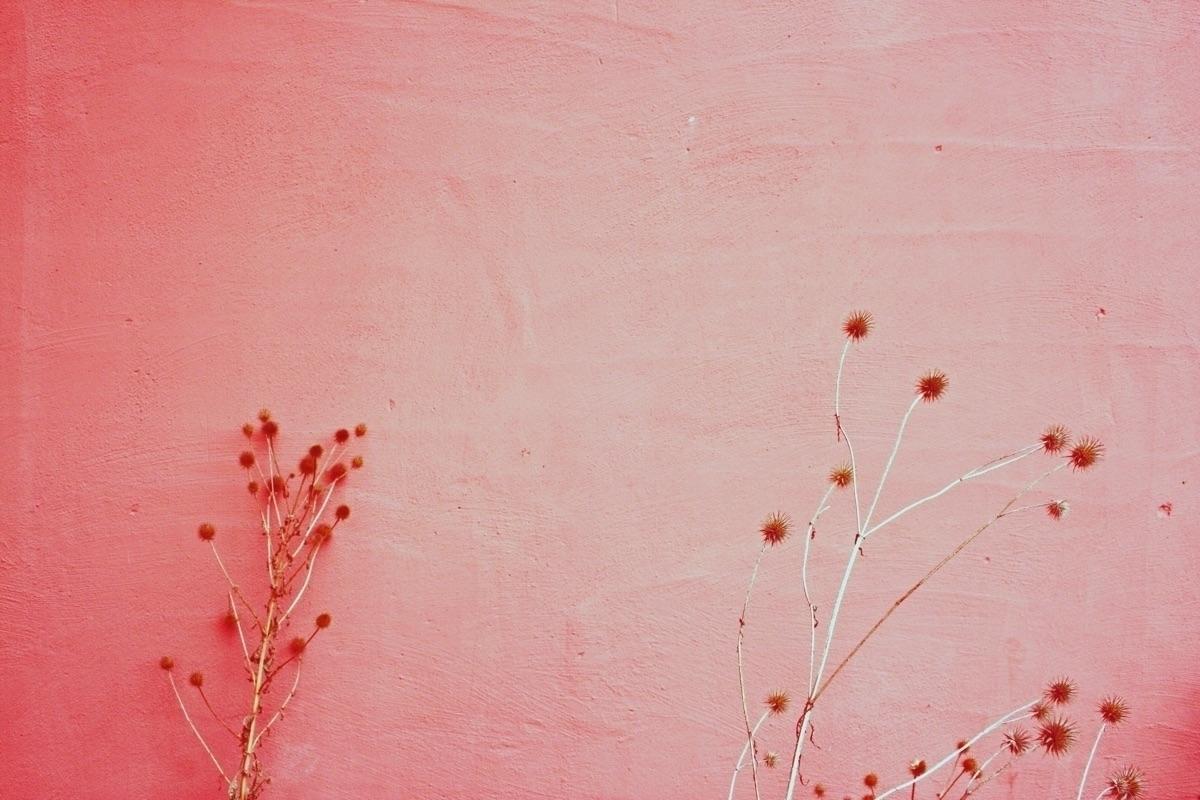 Simone  (@saganomsimone) Cover Image