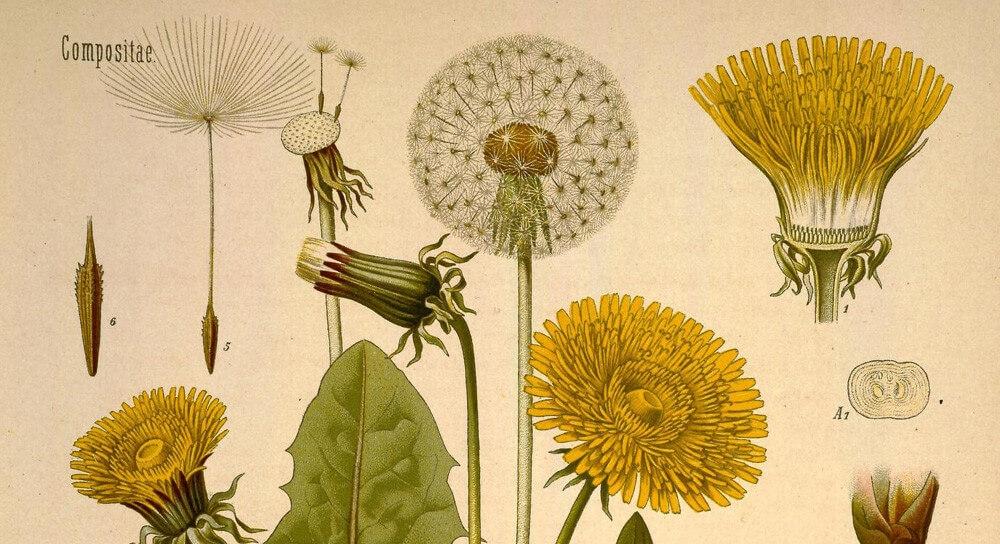 Anthrobotanica (@anthrobotanica) Cover Image