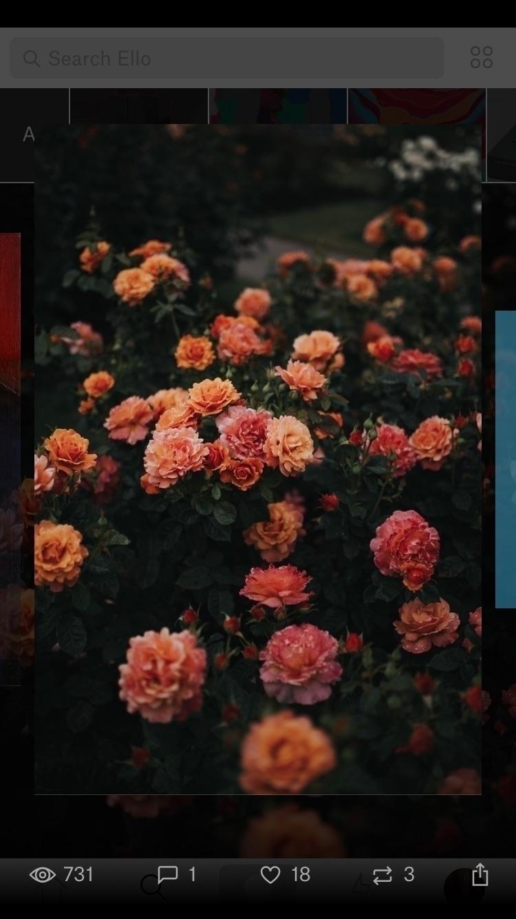 Leia (@leia_hs) Cover Image