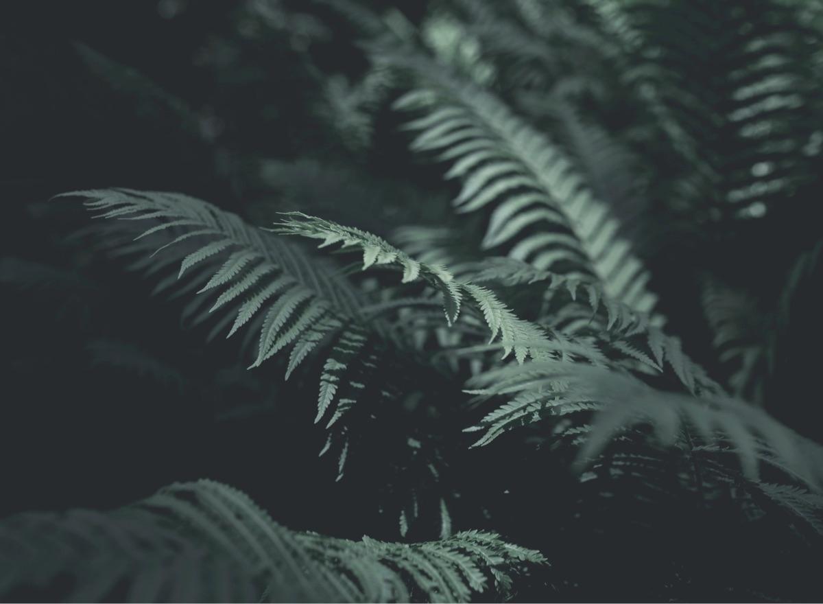 November Wild (@novemberwild) Cover Image