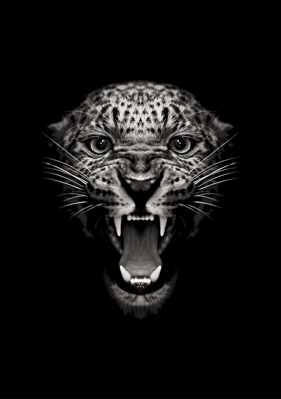 @asgeronsberg Cover Image